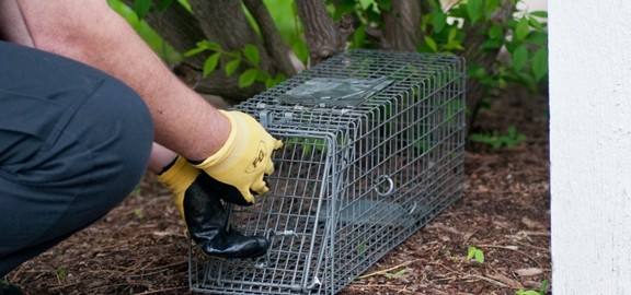 Animal Removal Leads Orlando cage rat rats squirrel squirrels raccoons