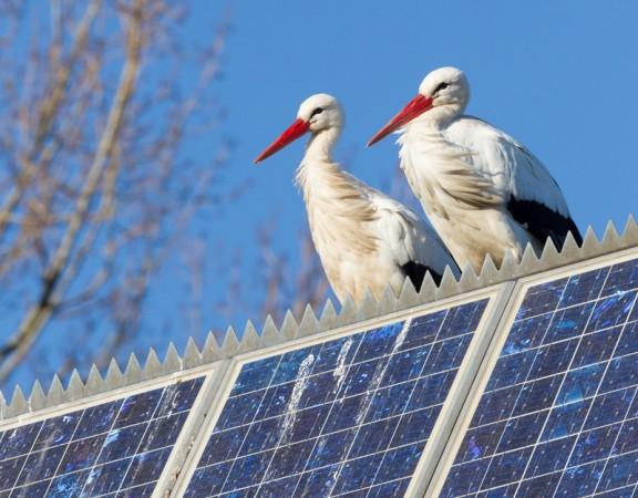 Call Verified Solar Panel Leads Solar Panel Leads internet marketing solar panel advertising solar panel estimates